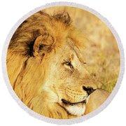 Lions Head Round Beach Towel