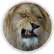 Lions Wink Round Beach Towel