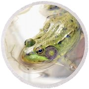 Lithobates Catesbeianus Or Rana Catesbeiana Round Beach Towel