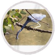 Little Blue Heron Going For Fish With Framing Round Beach Towel
