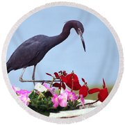Little Blue Heron In Flower Pot Round Beach Towel