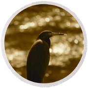 Little Blue Heron In Golden Light Round Beach Towel