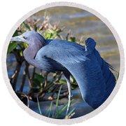 Little Blue Heron Sunbathing Round Beach Towel