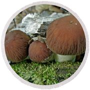 Little Brown Mushrooms In Moss Round Beach Towel