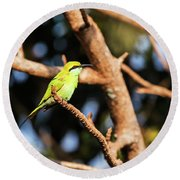 Little Green Bee Eater On A Branch Round Beach Towel