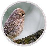 Little Owl Chick Practising Hunting Skills Round Beach Towel