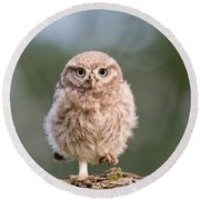 Little Owl Chick Round Beach Towel