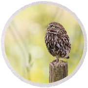Little Owl Looking Up Round Beach Towel