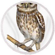 Little Owl Or Minerva's Owl Athene Noctua - Goddess Of Wisdom- Chouette Cheveche- Nationalpark Eifel Round Beach Towel