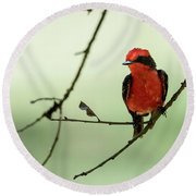 Little Red Beauty - Vermilion Flycatcher Round Beach Towel