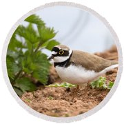 Little Ringed Plover Round Beach Towel