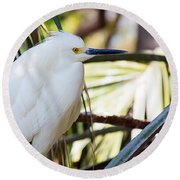 Little Snowy Egret Round Beach Towel