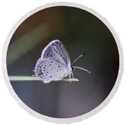 Little Teeny - Butterfly Round Beach Towel