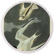 Little Tern Round Beach Towel by John James Audubon