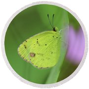Little Yellow Butterfly Close-up Round Beach Towel