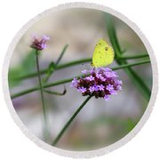 Little Yellow Butterfly On Verbena Round Beach Towel