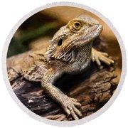 Lizard - Id 16217-202733-1873 Round Beach Towel