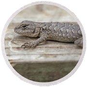 Lizard On Deck Round Beach Towel