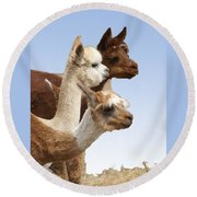 Llama's Three Round Beach Towel