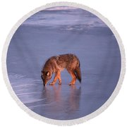 Lone Coyote On The Shore Of Lake Superior Round Beach Towel