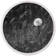 Lone Dandelion Black And White Round Beach Towel