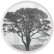 Lone Scots Pine, Crannoch Woods Round Beach Towel