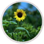 Lone Sunflower  Round Beach Towel