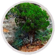 Lone Tree On A Cliff Round Beach Towel
