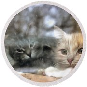 Lonely Kittens Behind The Glass Round Beach Towel