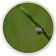 Lonely Snail -florida Round Beach Towel