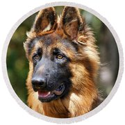 Long Coated German Shepherd Dog Round Beach Towel