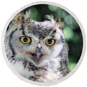 Long Eared Owl In The Trees Round Beach Towel