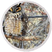 Long Eared Owl Resting Round Beach Towel