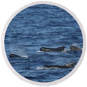 Long-finned Pilot Whales Round Beach Towel