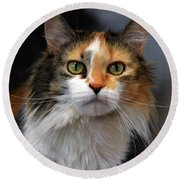 Long Haired Calico Cat Round Beach Towel