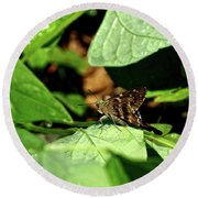 Long Tail Skipper Butterfly 1 Round Beach Towel
