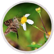 Long-tailed Skipper Butterfly Round Beach Towel