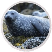 Long Whiskers On A Harbor Seal Round Beach Towel
