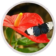 Longwing Round Beach Towel