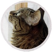 Look Out Window Tabby Cat Round Beach Towel