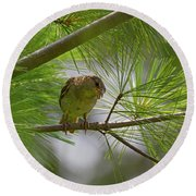 Looking Down - Common Sparrow - Passer Domesticus Round Beach Towel