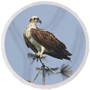 Looking For Dinner Round Beach Towel