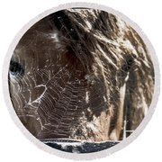 Looking Through The Web Round Beach Towel