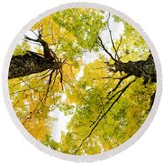 Looking Up At Fall Round Beach Towel