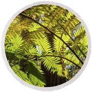 Looking Up To A Beautiful Sunglowing Fern In A Tropical Forest Round Beach Towel