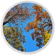 Looking Upward At Autumn's Trees  Round Beach Towel