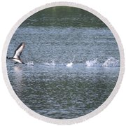 Loon Ascending... Round Beach Towel