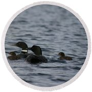 Loon Family Round Beach Towel
