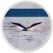 Loon Take Off Aborted Round Beach Towel
