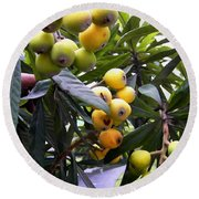 Loquat Exotic Tropical Fruit  2 Round Beach Towel